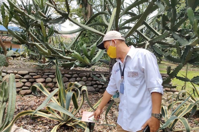 Peneliti-beri-5.000-KTP-Pohon-di-Kebun-Raya-Bogor.jpg